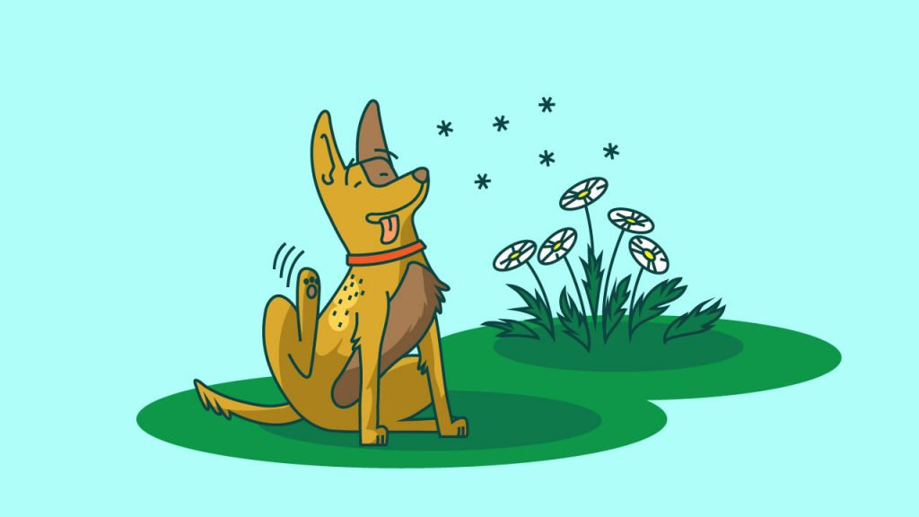 cbd for dogs with skin allergies