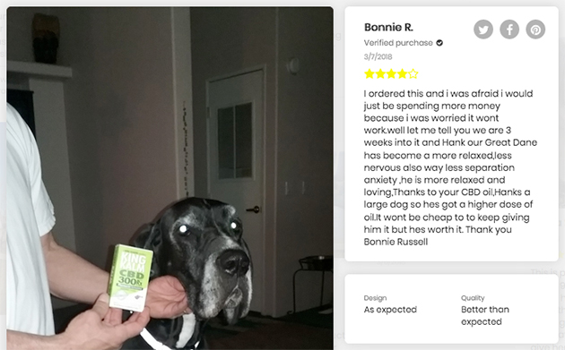 a great dane with anxiety