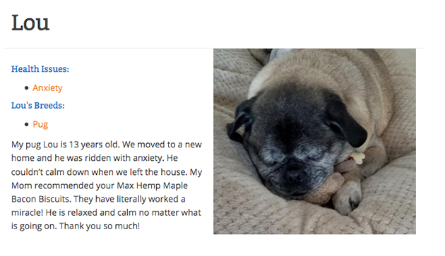 lou the pug with anxiety