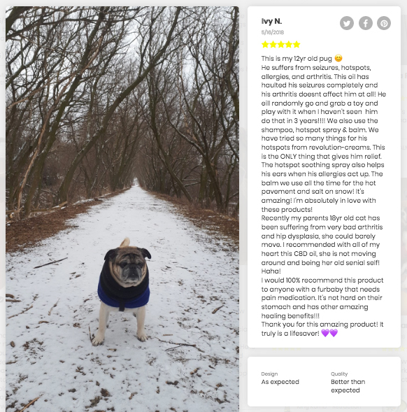 pug giving a cbd testimonial for seizures