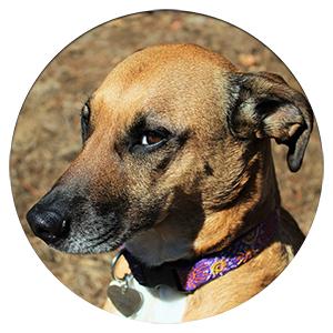 dog with a sad face