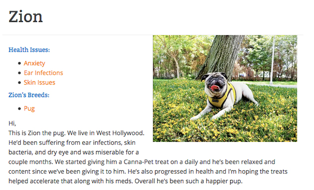zion the pug with a skin condition