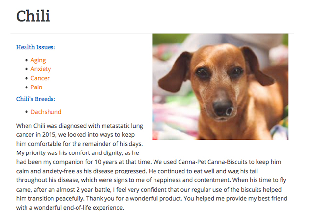 Chili the dachshund giving a cbd testimonial
