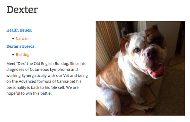 CBD testimonial from Dexter the bulldog