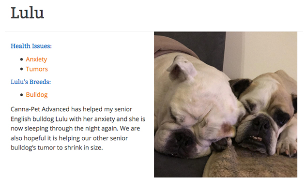 CBD testimonial from Lulu the bulldog