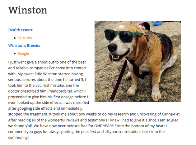 winston the beagle give testimonial for cbd oil company
