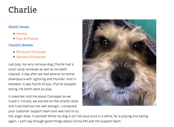 Charlie the schnauzer gives a cbd testimonial