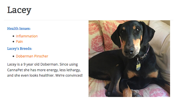 CBD testimonial from Lacey the dobermann
