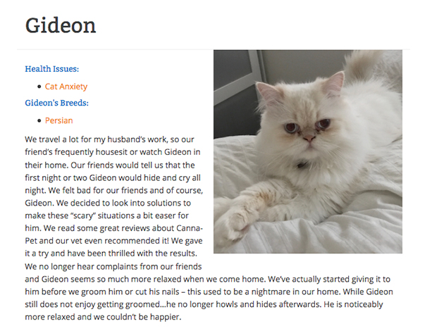 Gideon the cat that uses CBD