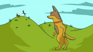 cbd for dogs with hip dysplasia
