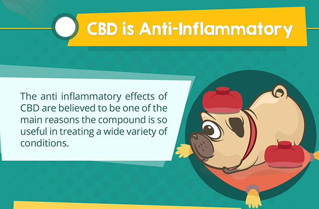 cbd for inflammation banner