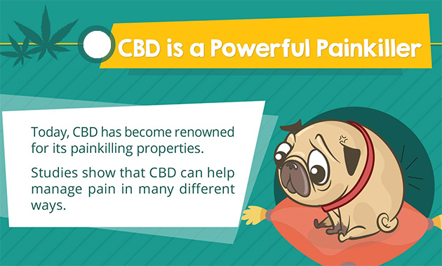 cbd for pain in dogs