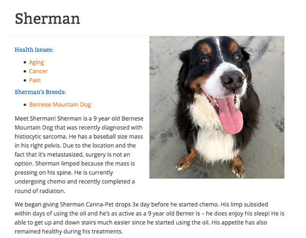 Sherman the dog with lymphoma