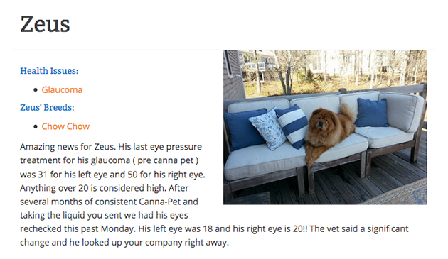 Zeus the dog with glaucoma gives a CBD review