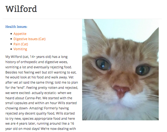 Wilford the cat with IBD