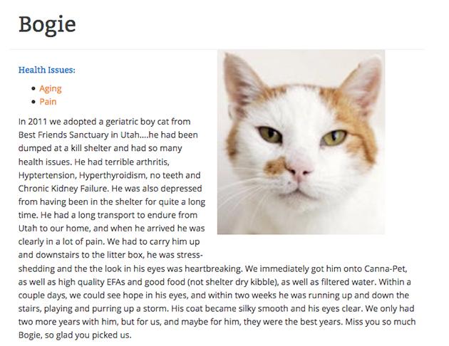 Bogie the cat giving a CBD testimonial