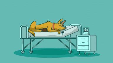 cbd oil for fatty tumors in dogs