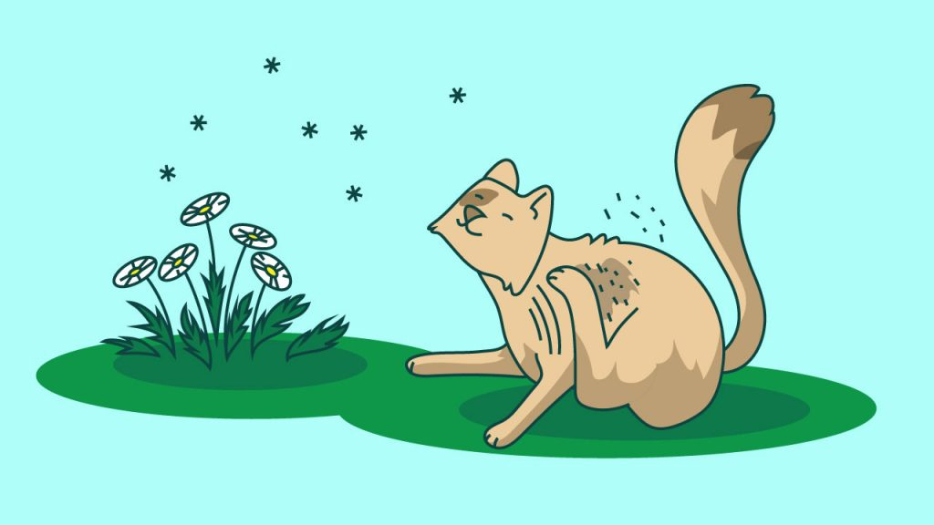 cbd for cats with allergies