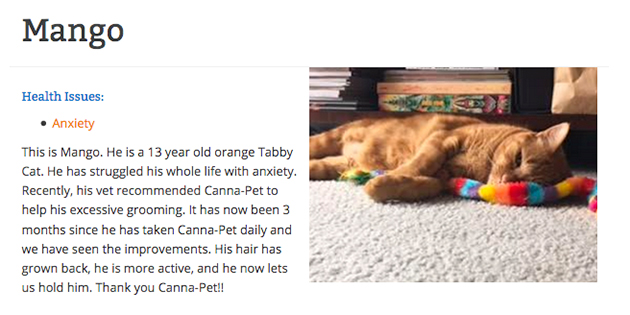 cbd review from mango the cat