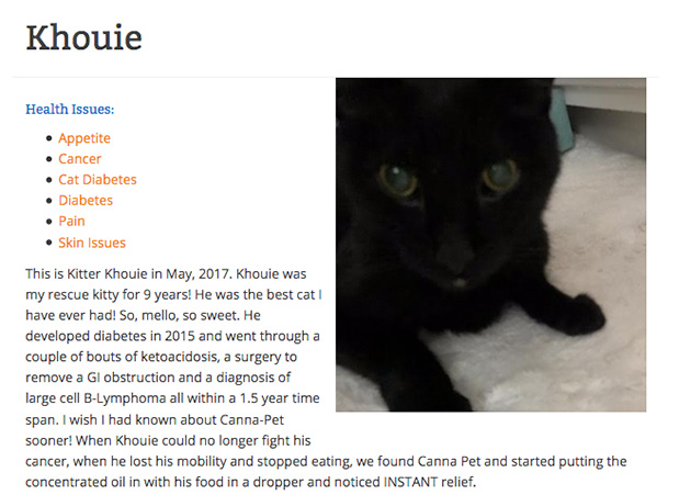 Khouie the cat giving a cbd testimonial for cancer