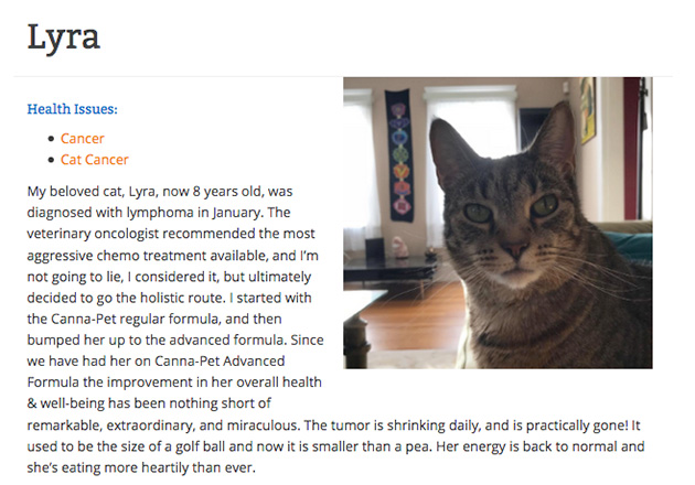 lyra the cat giving a cbd testimonial