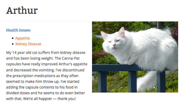 cbd testimonial from arthur the cat