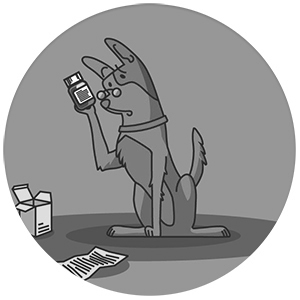 dog looking at a medication bottle