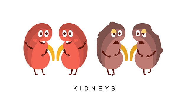 cartoon image of kidney disease