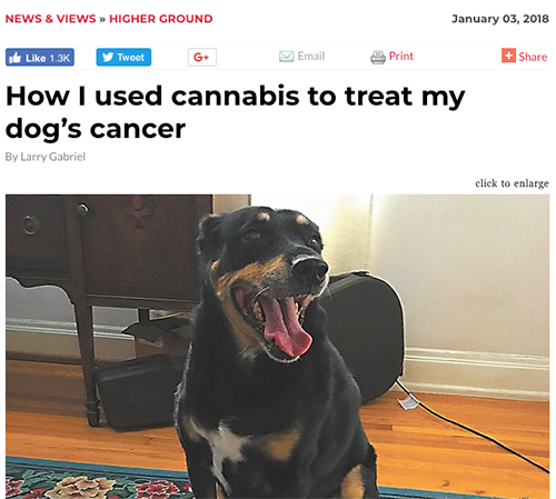 news story on using cannabis on dog with cancer
