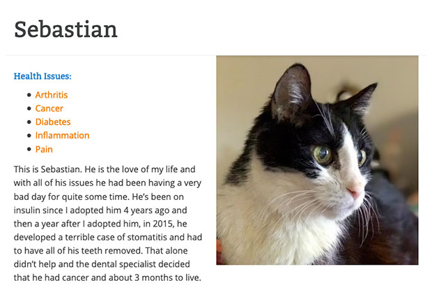 seabastian the cat with diabetes